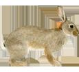 Immagine Coniglio comune