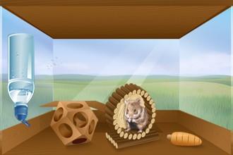 Negozio HamsterStory